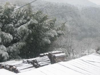 雪2010_01_14.jpg